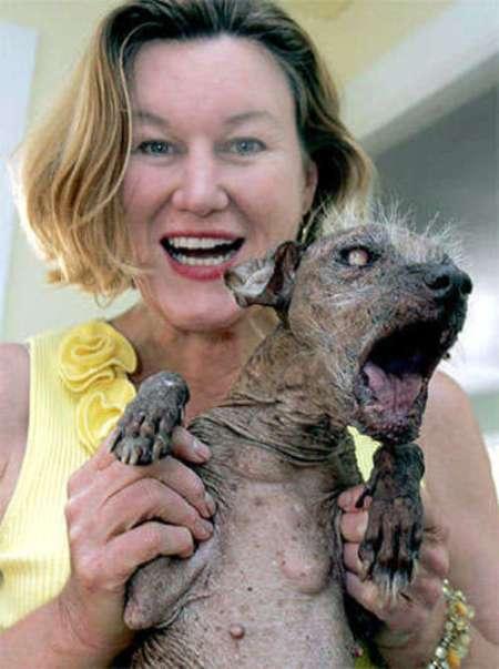 worlds_ugliest_dog.jpg